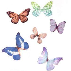 Grands Papillons