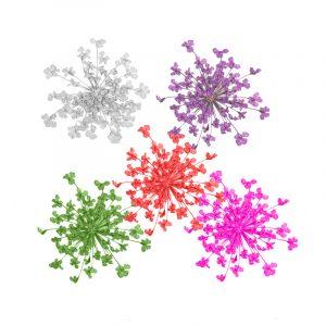 Fleurs séchées Pissenlits