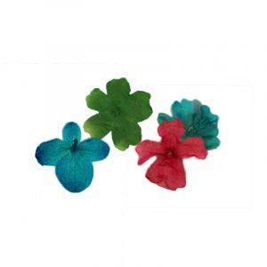 Fleurs séchées Mini