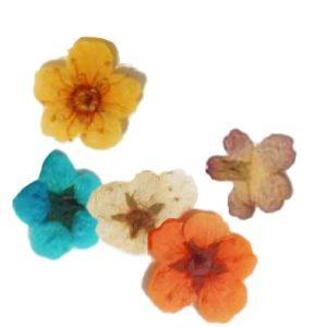 Fleurs séchées Myoso