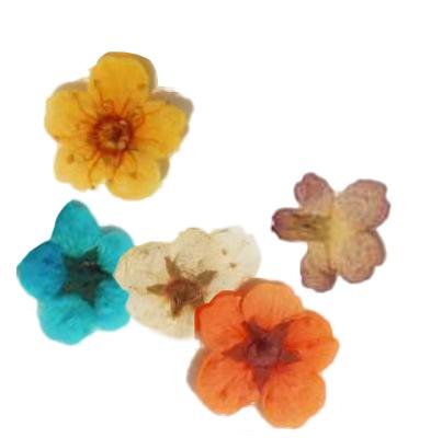 fleurs-sechees-myoso